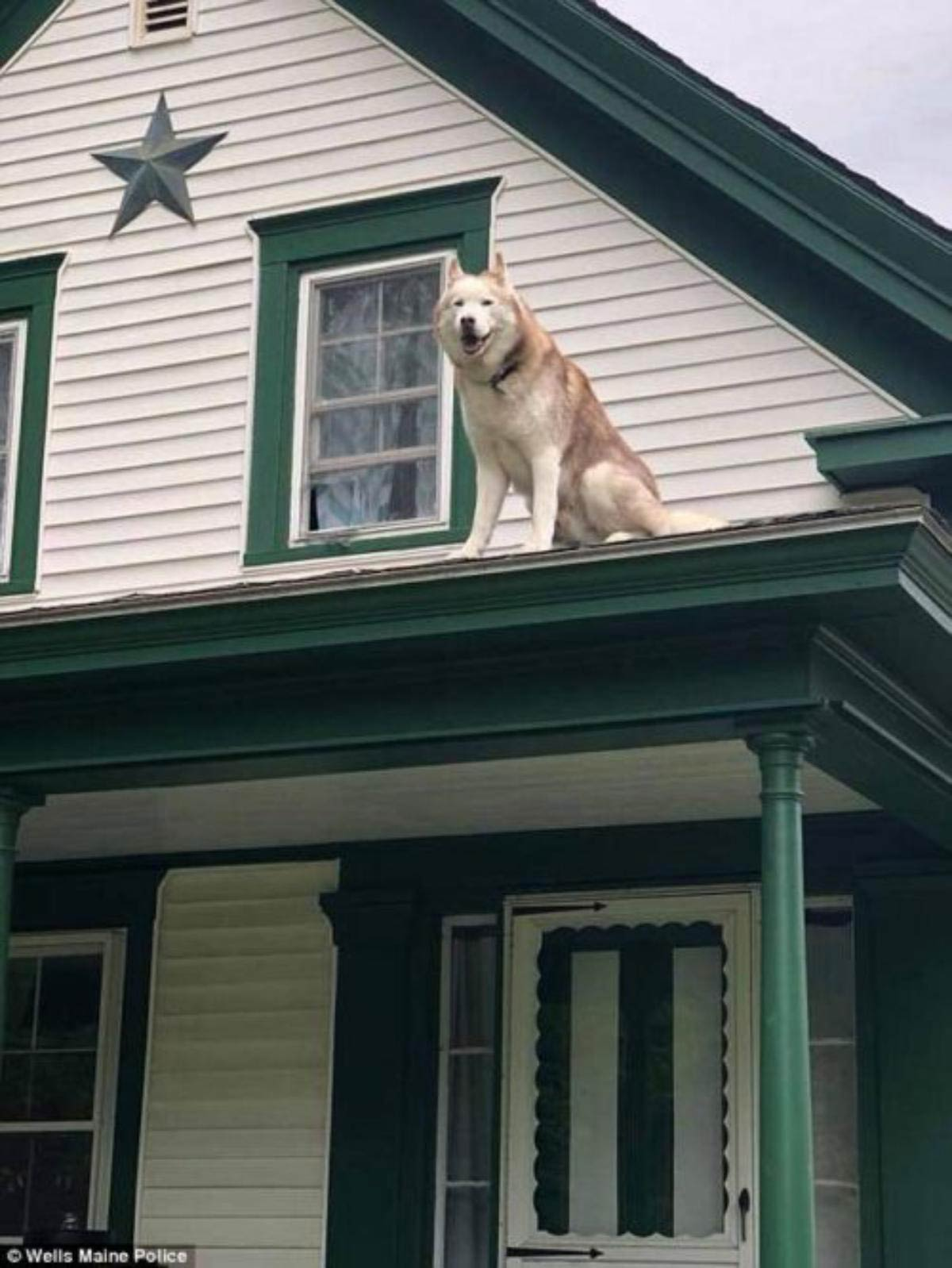 """Cachorro """"beija"""" o bombeiro que o resgatou do telhado"""