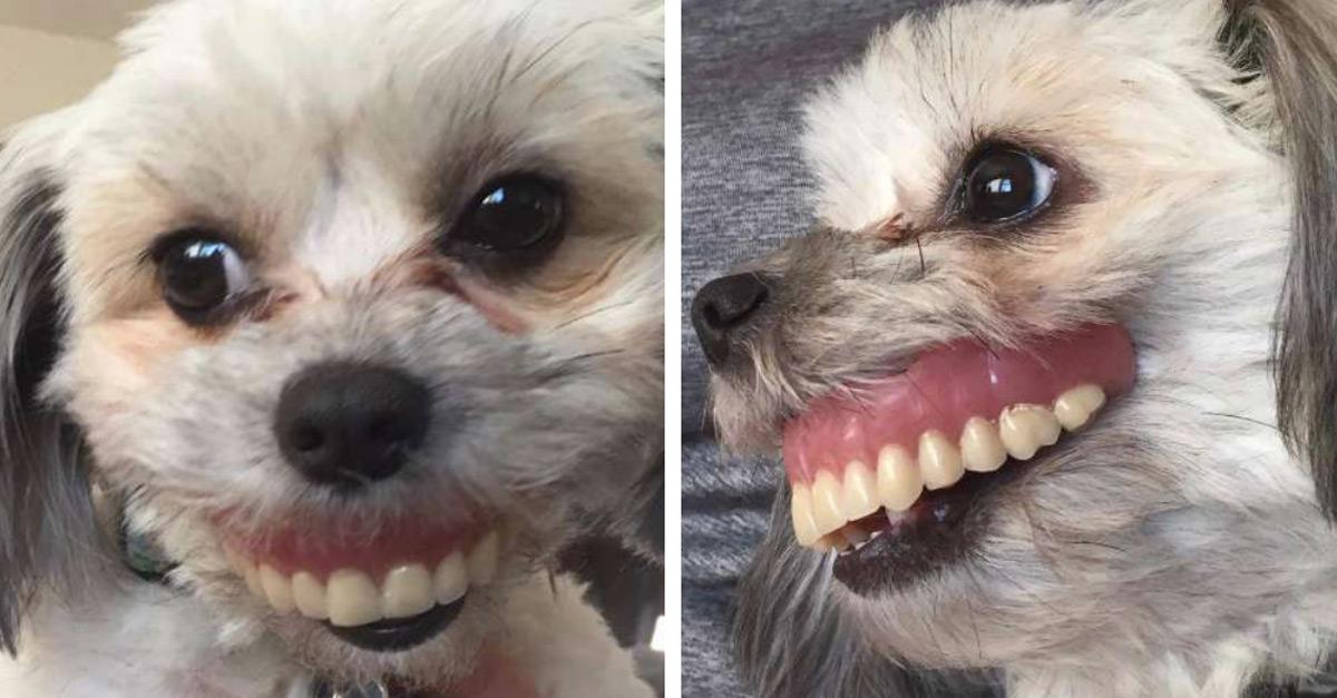 O Homem Não Da Valor Quando Perde Da Edelziaoliveira: Homem Perde A Dentadura E Descobre Cadelinha Com Um Novo