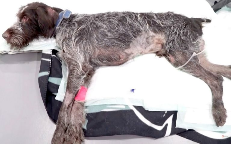 Cão idoso maltratado e paralisado é abandonado como lixo pelo agressor 2