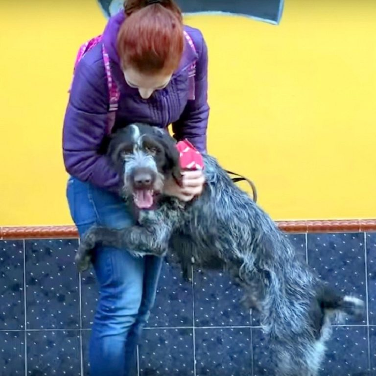 Cão idoso maltratado e paralisado é abandonado como lixo pelo agressor 3