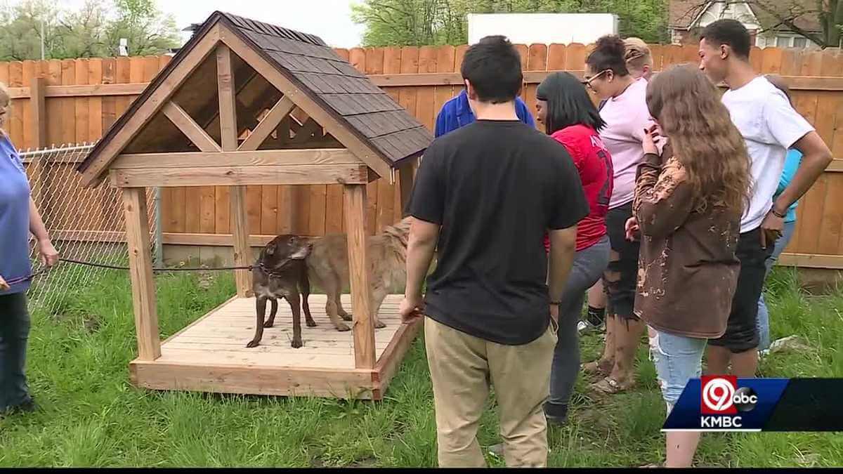Homem cria santuário para cães idosos que foram abandonados 4