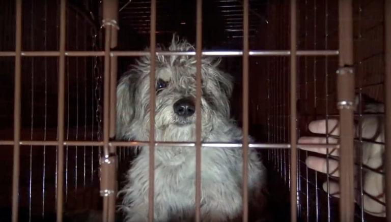 Cachorro abandonado na rua esperou no mesmo local por semanas sua família retornar 2