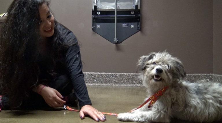 Cachorro abandonado na rua esperou no mesmo local por semanas sua família retornar 3