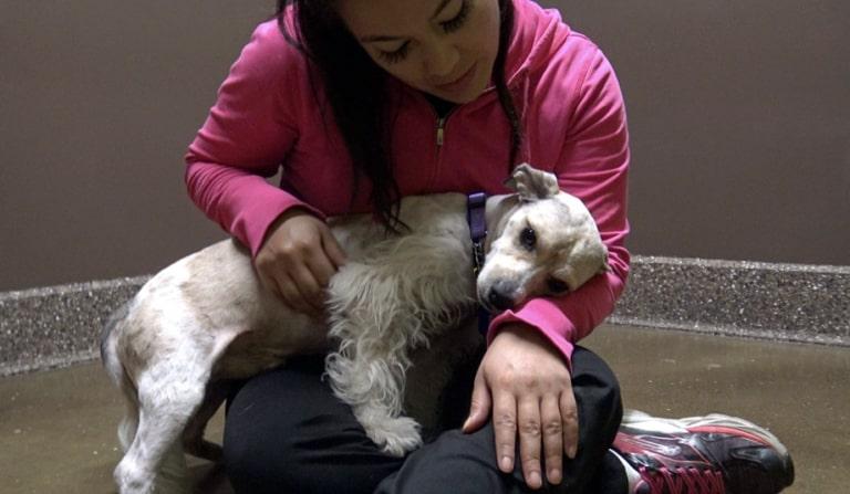 Cachorro abandonado na rua esperou no mesmo local por semanas sua família retornar 4