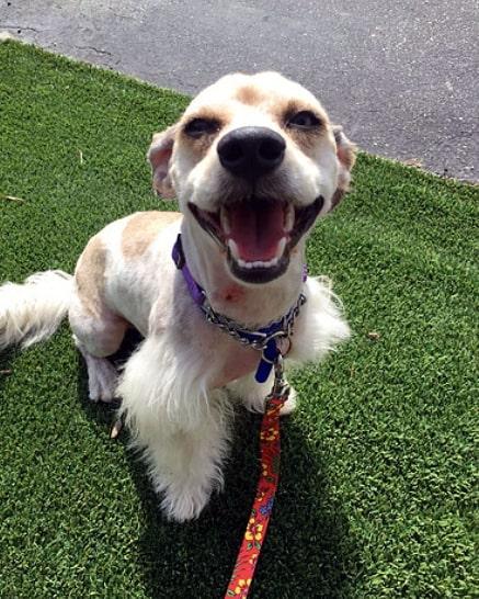 Cachorro abandonado na rua esperou no mesmo local por semanas sua família retornar 5
