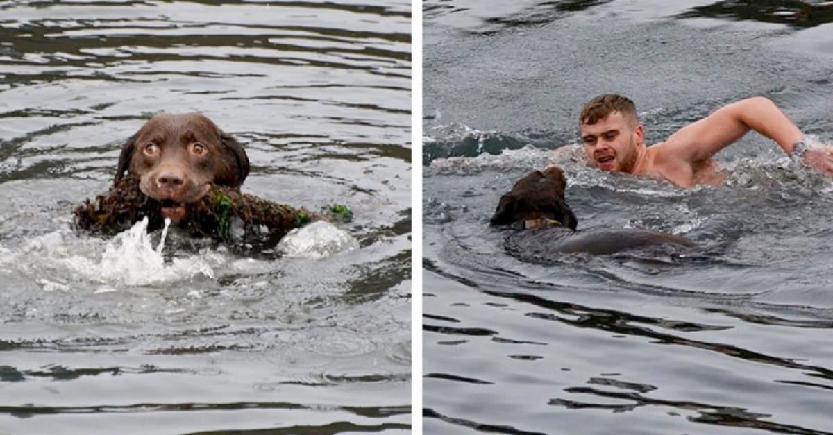 Homem mergulha em águas geladas e resgata cachorro que estava enrolado em uma corda